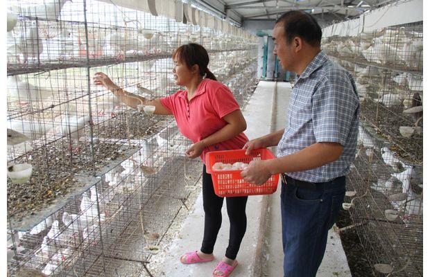 曾都区科协帮扶鸿翔鸽业生态养殖科普示范基地科学养鸽