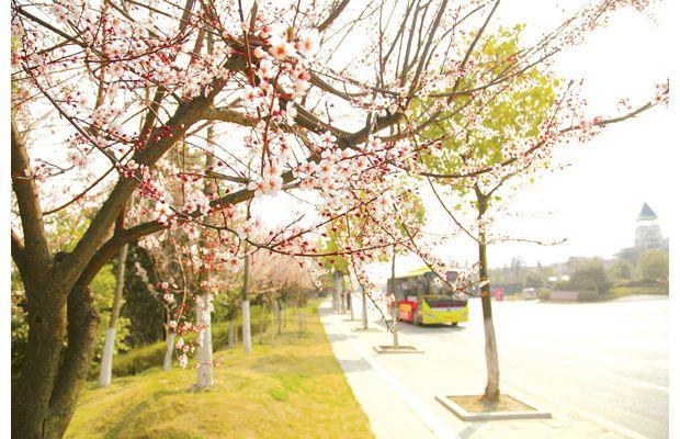 随城大地鲜花盛开春意盎然