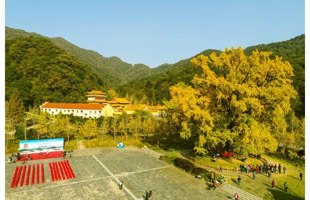 游客在大洪山风景区赏银杏