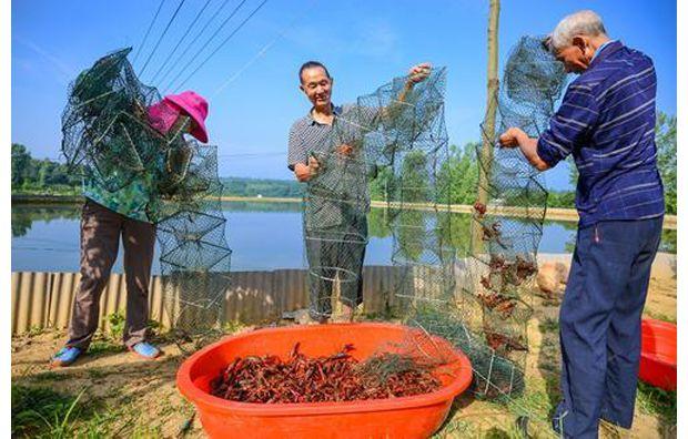 小龙虾助农增收