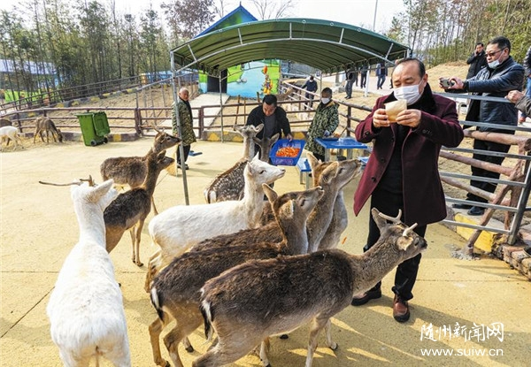 游客在鹿园和梅花鹿互动